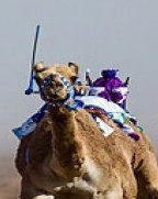Camel Racing Dubai Robot Jockey