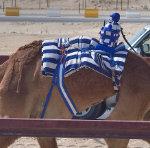 camel racing track