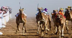 camel races in dubai